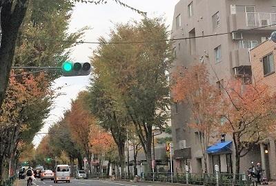 11-16中杉通