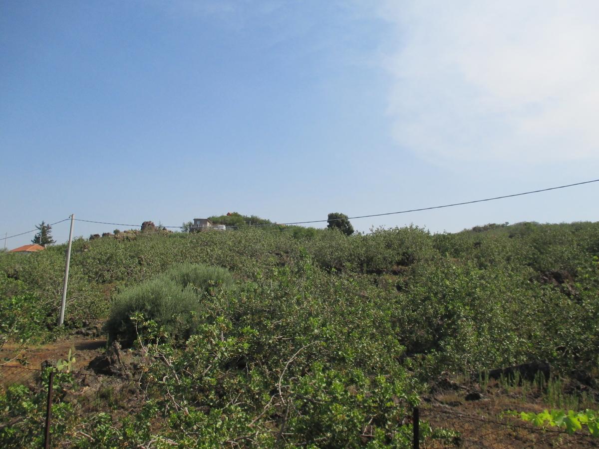 山と空 山麓にはピスタチオの木