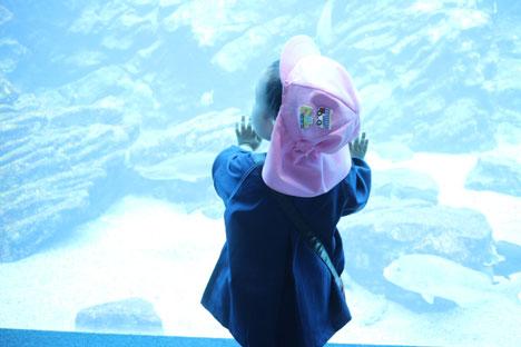 3歳 保育園 うみの杜水族館へ遠足
