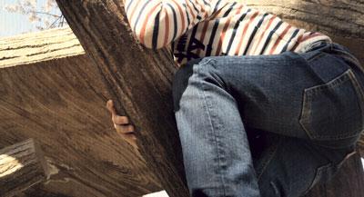 5歳 木登り