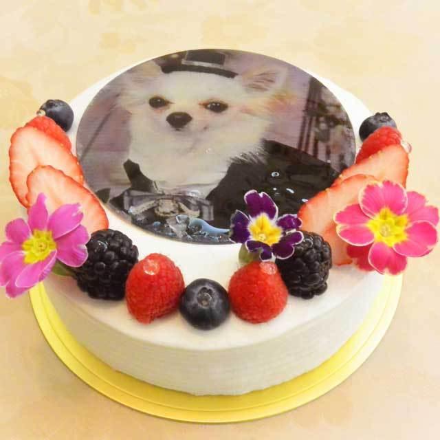 ≪スイーツガイド限定≫写真ケーキ
