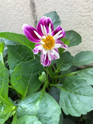 f:id:sweetviolet-lailac-love33:20200609114435j:image