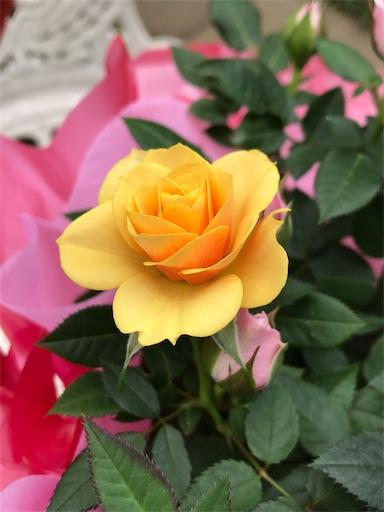 f:id:sweetviolet-lailac-love33:20210509172249j:plain