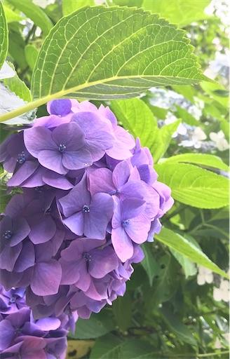 f:id:sweetviolet-lailac-love33:20210602105015j:plain