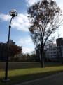 [公園][木]