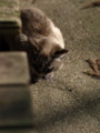 [猫][ネコ]