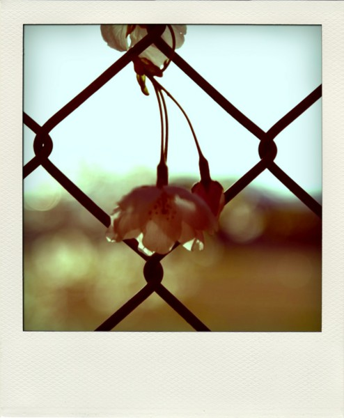 [POLADROID]