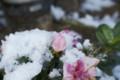 [D80][花]