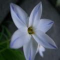 [GR][花]