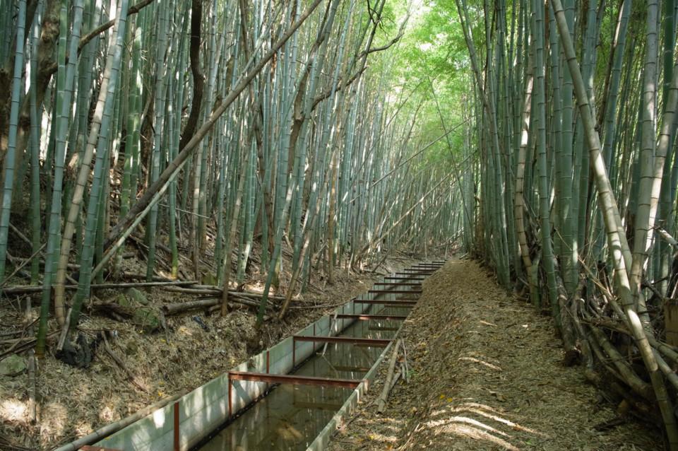 意外と整備されてる竹林