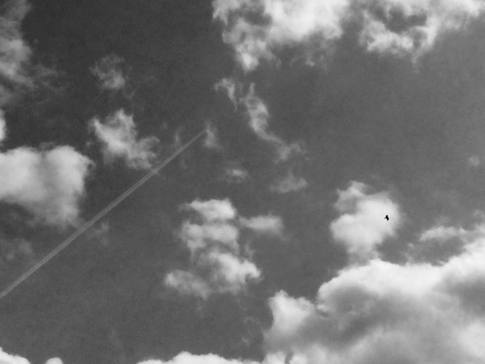 飛行機雲と鳥