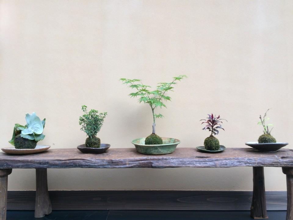 個別の5鉢
