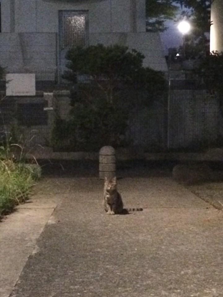 待ってたネコ