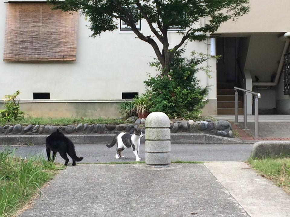ネコ・一触即発1