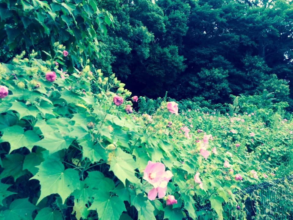 通勤路に咲いていた花