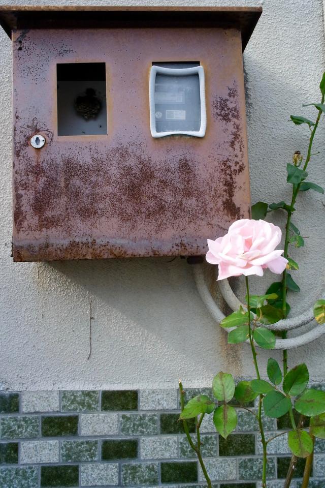 バラと室外基盤