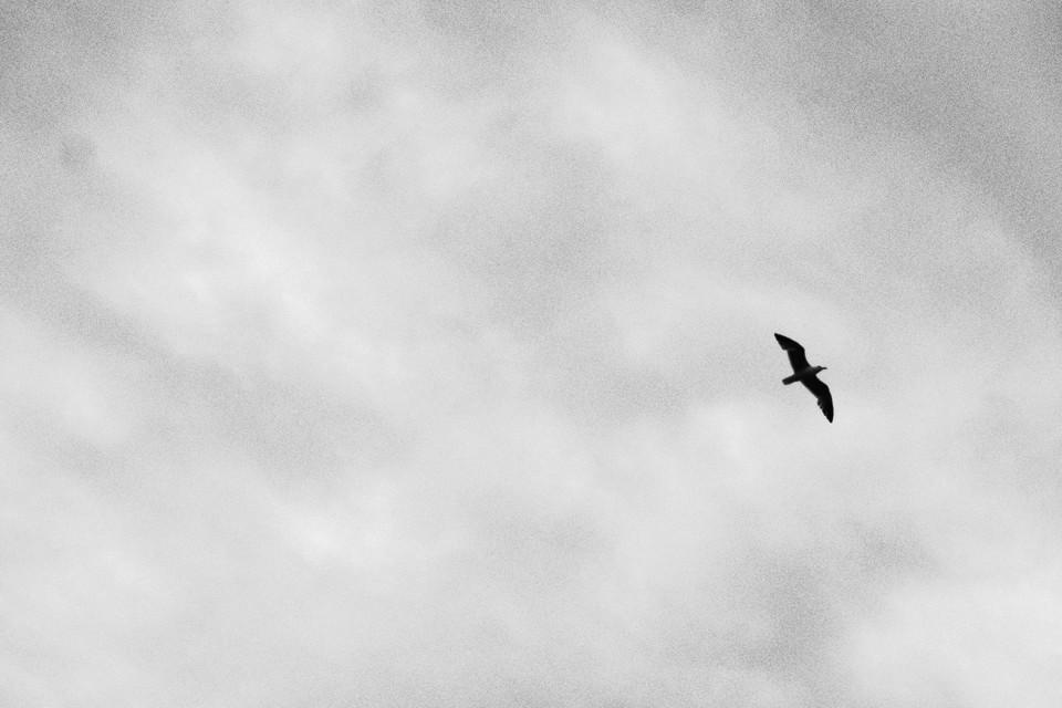 イギリスの鳥