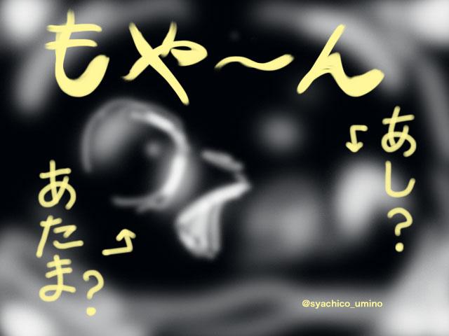 f:id:syachico:20170226151449j:plain