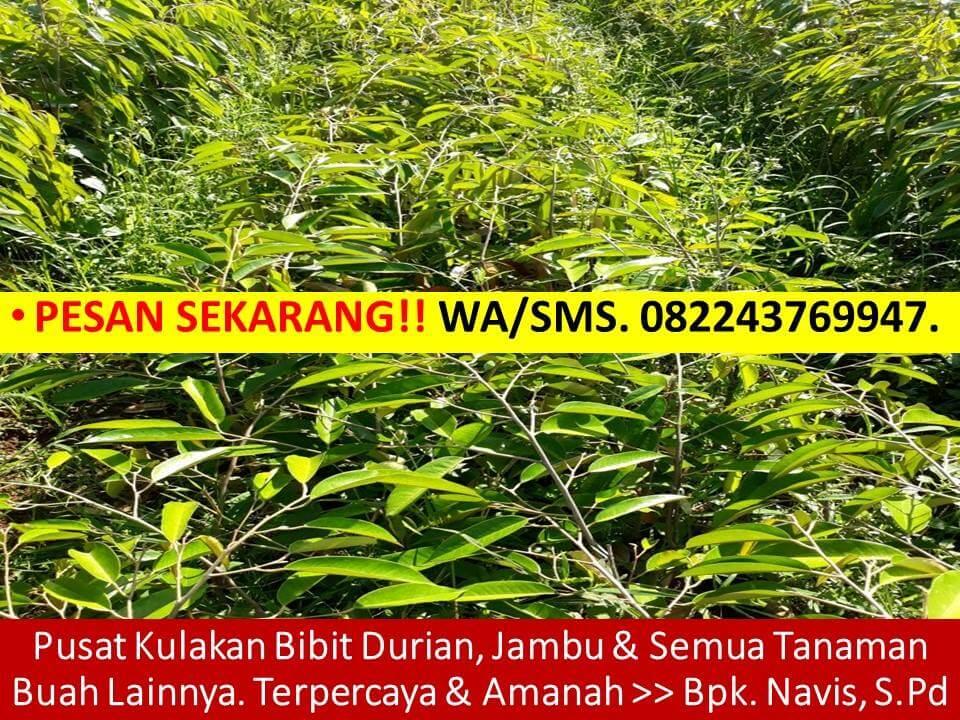 f:id:syaifulanam77:20171117154719j:plain