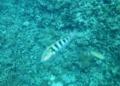 [魚類][西表島]