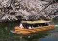 京都新聞写真コンテスト 船上の花見