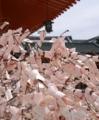 京都新聞写真コンテスト 満開の桜
