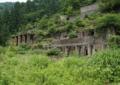 緑の魔境 京都新聞写真コンテスト