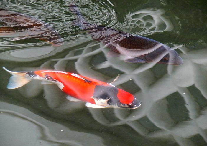 水温む 京都新聞写真コンテスト