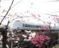 旅立ち 京都新聞写真コンテスト