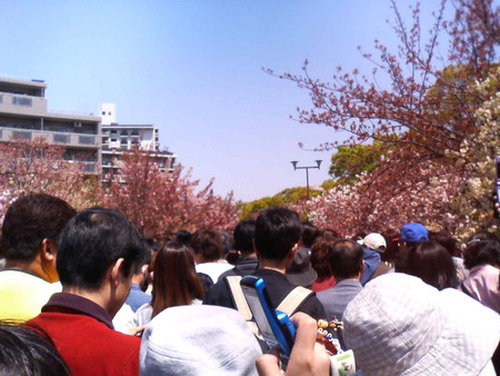 桜の通り抜けは人大杉