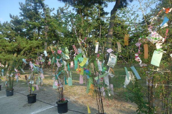 浜坂松の庭七夕まつり