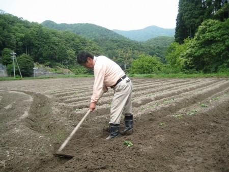 初体験芋の植え付け!