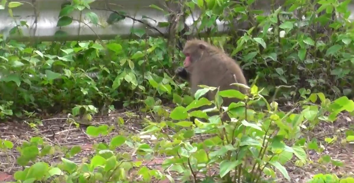 alone-monkey