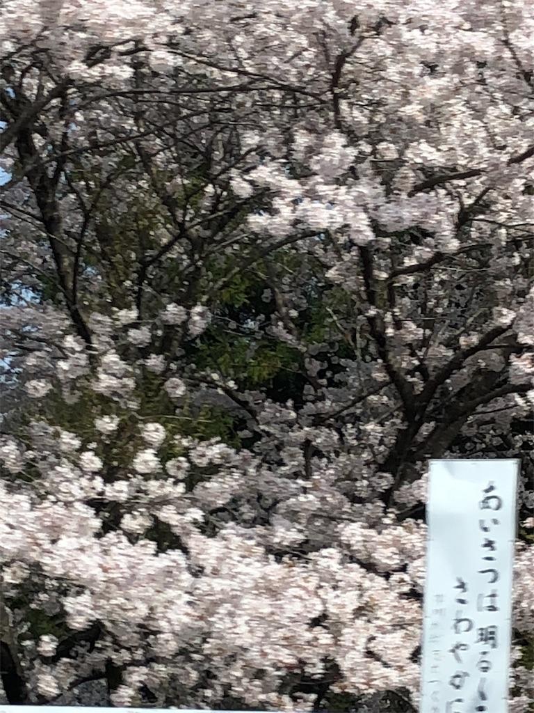f:id:syokora000:20180401152240j:image