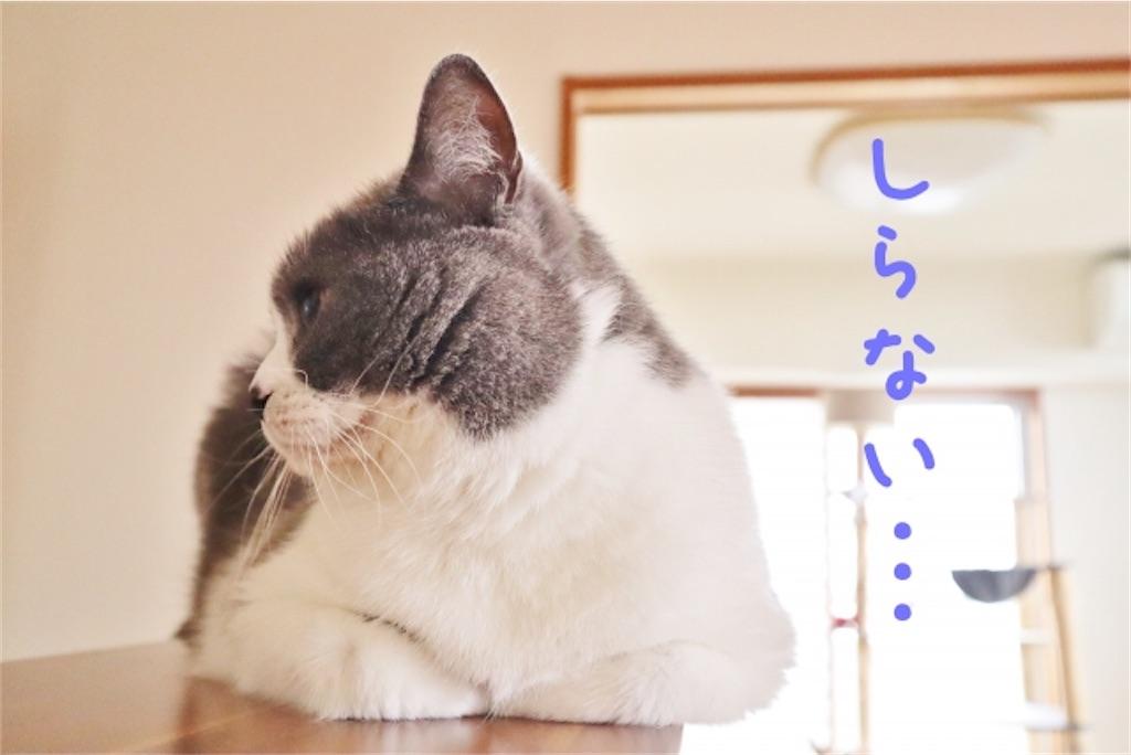 f:id:syouyudango:20210217191119j:image