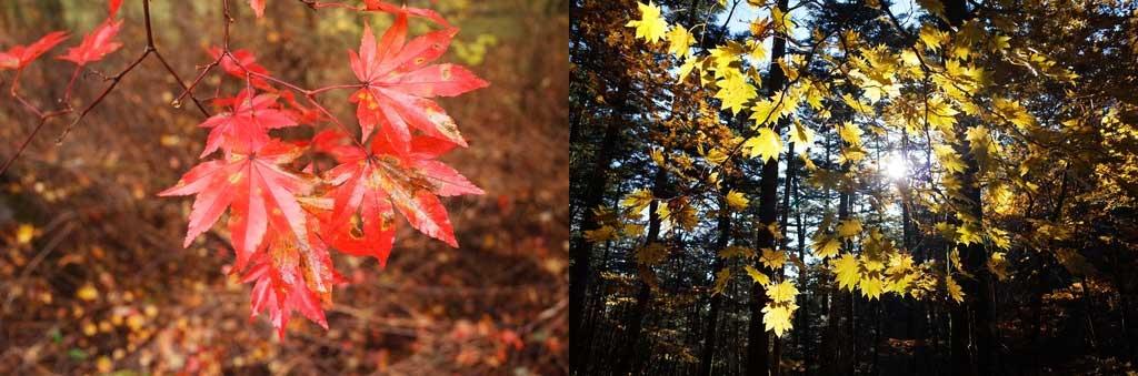 紅葉が鮮やかでとっても綺麗でした♪