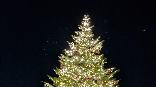 夜のクリスマスツリーの写真