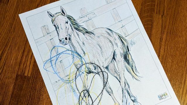 馬の塗り絵の写真