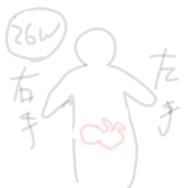 26週の赤ちゃんの位置のイラスト