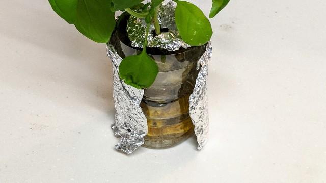 ペットボトルで室内栽培の写真