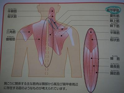 f:id:syufumaruko:20190126104913j:plain