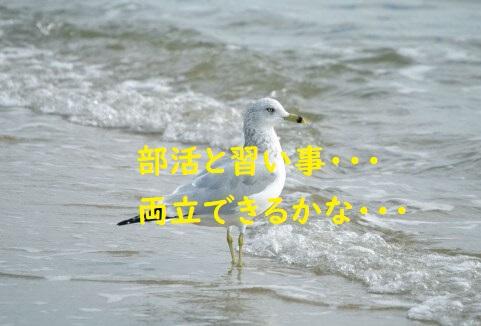 f:id:syufumaruko:20200206105819j:plain