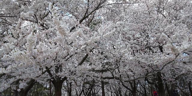 f:id:syufumaruko:20200409145732j:image