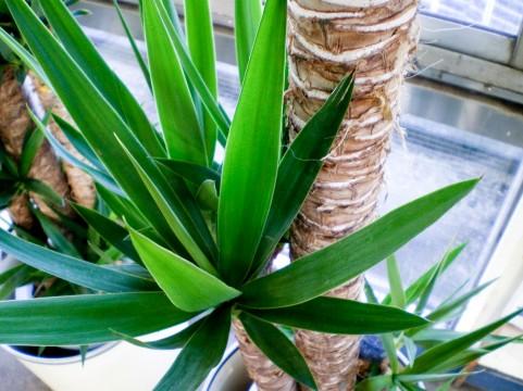 観葉植物と風水、環境の関係