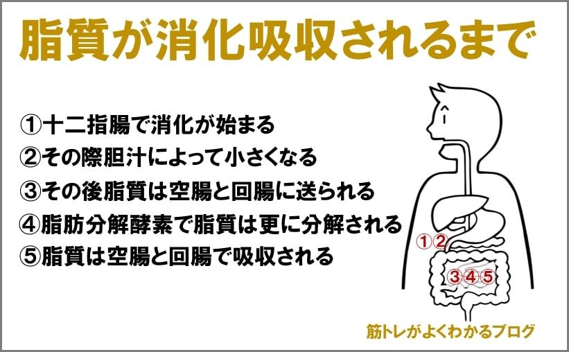 脂質が消化吸収されるまでの図
