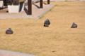 [NIKON D90][鳥]