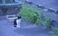 [NIKON D90][猫]