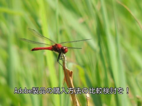 f:id:syunki-gt:20140225182837j:plain