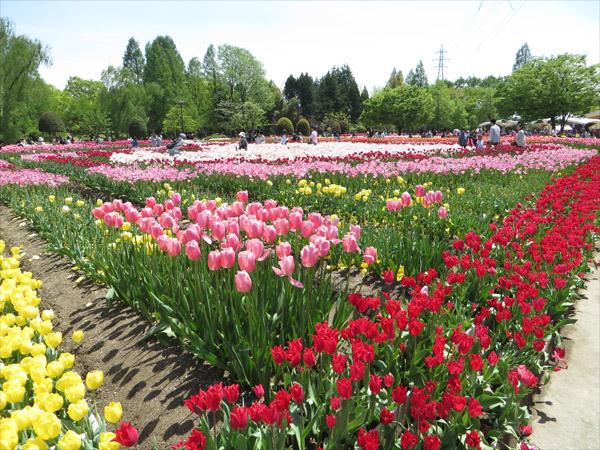 f:id:syura_muramasa:20150425115921j:image:w350