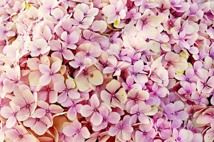 あじさい 花 自然 美しい フローラ 背景 夏 アジサイの花 明るい ブルー